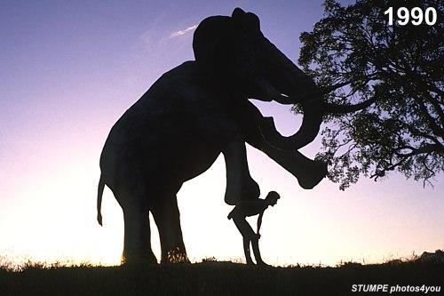elefant_kuba_1.jpg
