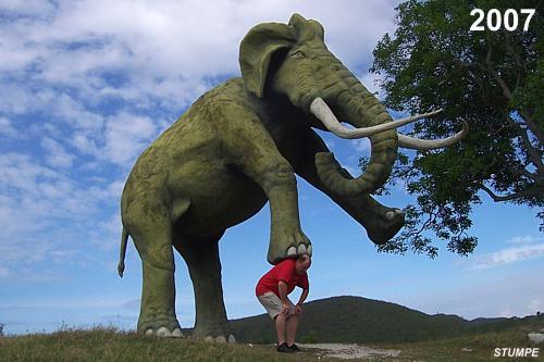 elefant_kuba_2.jpg