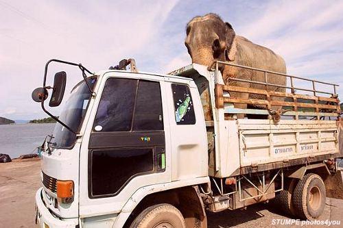 lkw_elefant.jpg