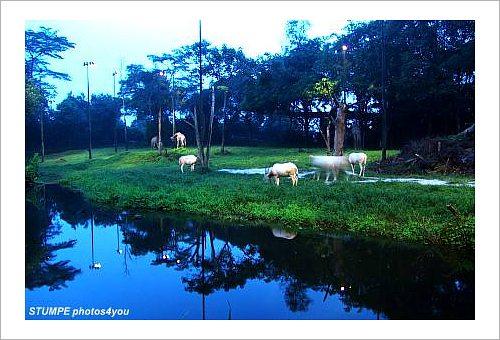 singapore_zoo.jpg