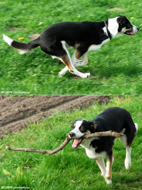 dog_in_action.jpg
