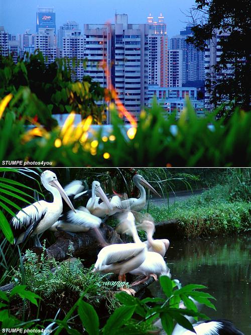 singapur_stativ.jpg