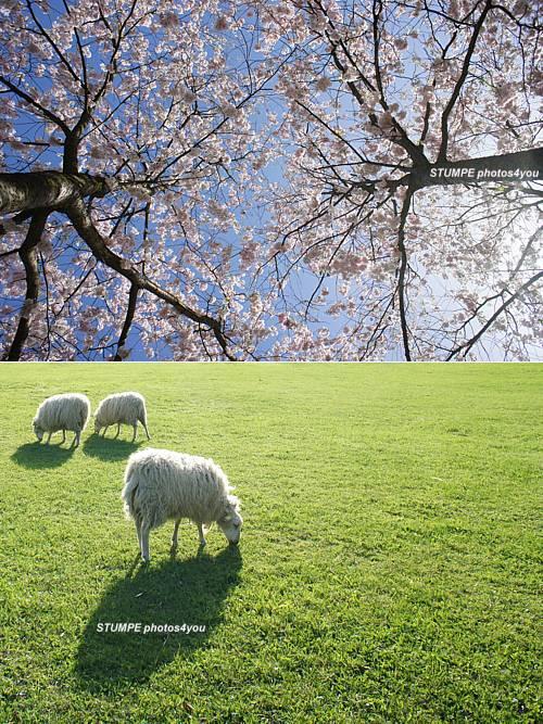 spring_april_2011.jpg